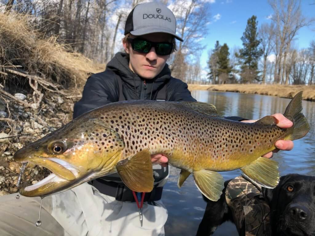 Montana Brown Trout - Missoulian Angler